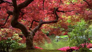 Yoga para el deporte: Yoga para fortalecer isquiotibiales.