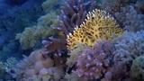 Arrecifes de coral, en peligro de extinción