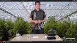 Hacer germinados en cuatro pasos, breve y sencillo
