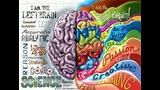 Cerebro del artista