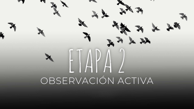 12 Observación activa